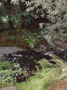 0933 Muir Woods Stream