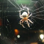 7246 Spider In Web