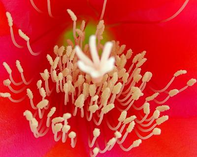 8118 Cactus Flower close-up