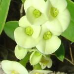 8122 Tiny Yellow Flowers