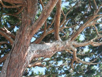 Torrey Pine 1