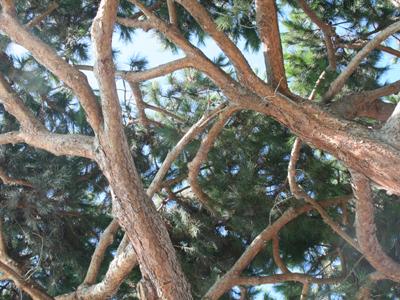 Torrey Pine 2