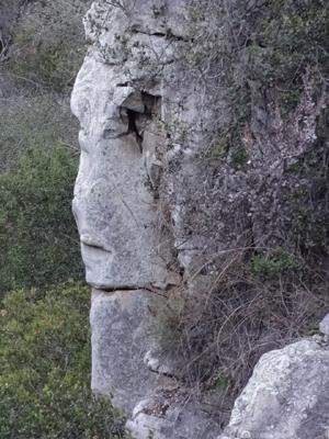 Elfin Forest Sentinel