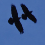 One Day of the Condors