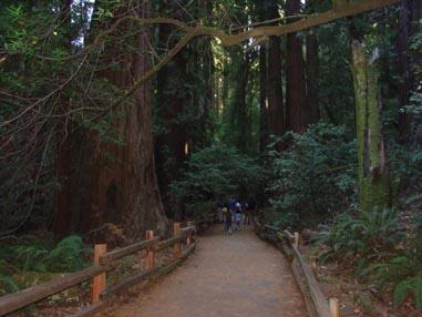 0959 Muir Woods Path
