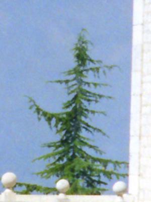 Monte Cassino Lone Pine